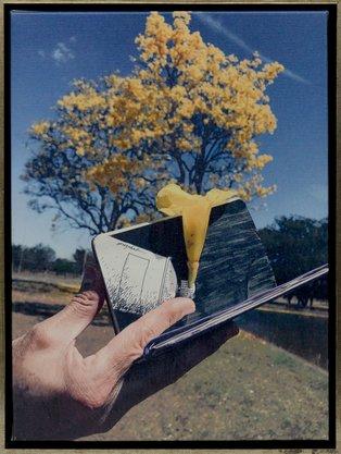 Ipê Amarelo - Toninho Euzébio 45 CM x 35 CM (vertical) Canvas